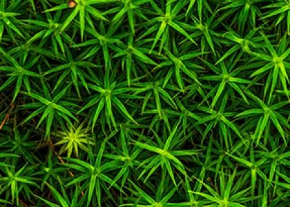Ansvarlighedskriterier for træbaseret biomasse der forbruges i Danmark