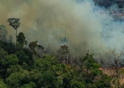 Høringssvar vedr. EU's meddelelse om at beskytte verdens skove